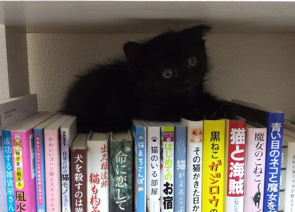 本棚の上のそら2