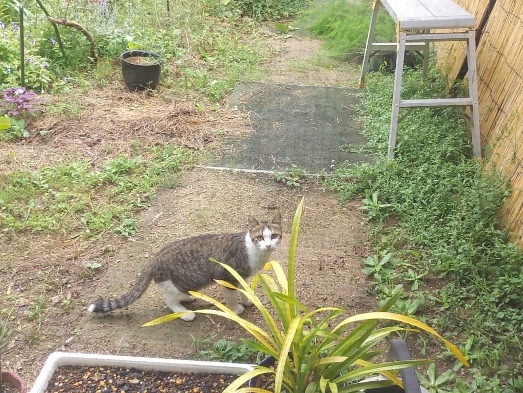 のうさぎカフェの猫