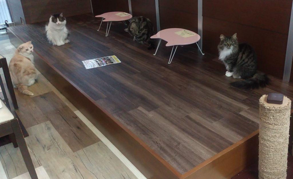 猫カフェ肉灸段スペース