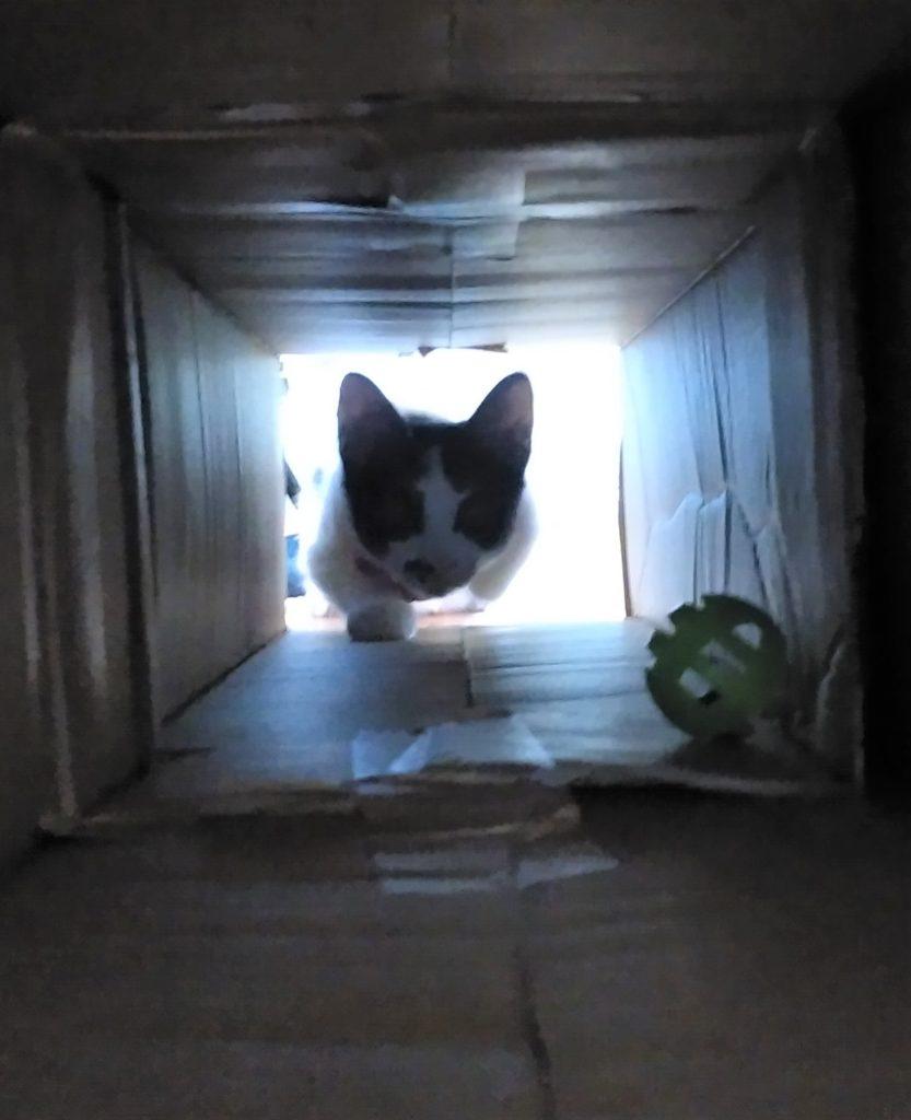 トンネルの中のまめ