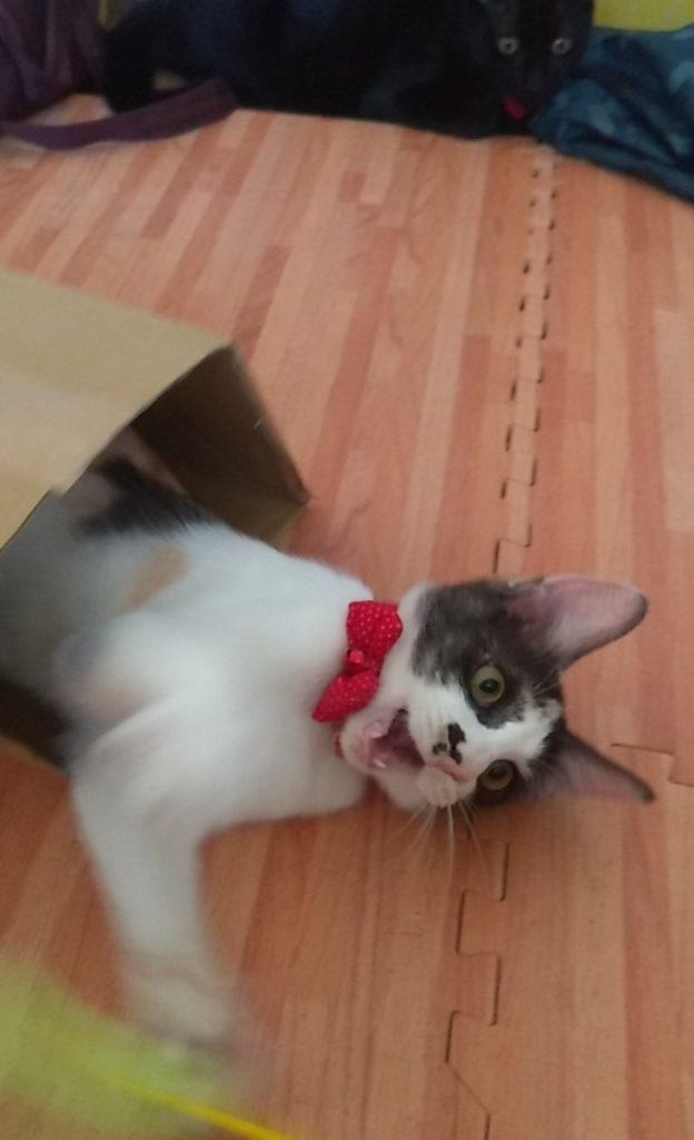 まめの猫パンチ