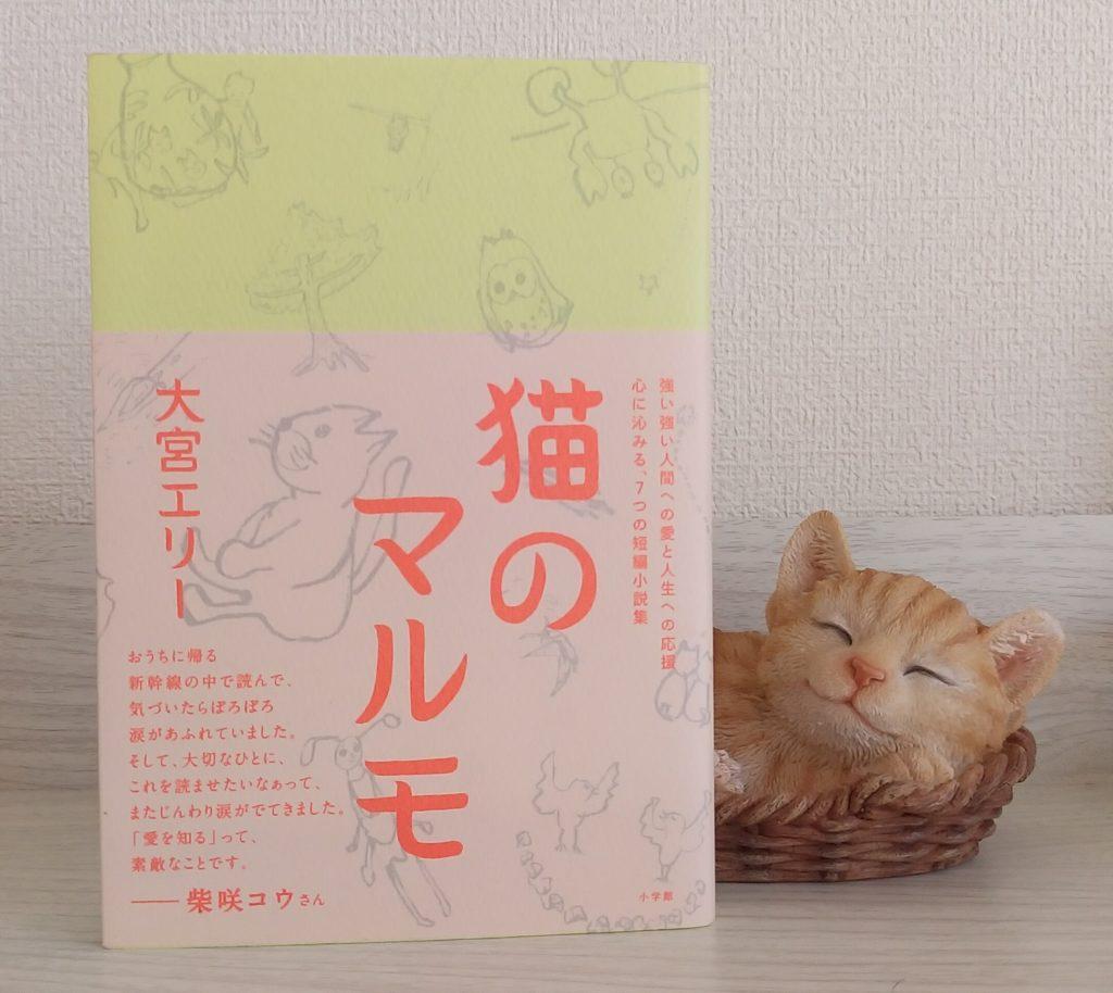 猫のマルモ