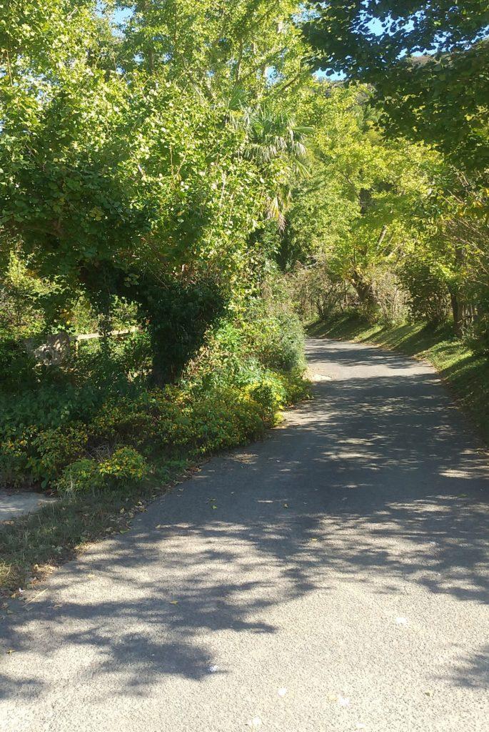 『DEER LAND FARM 岡﨑牧場』緑の道