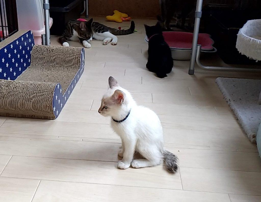 保護ねこハウスの猫たち2
