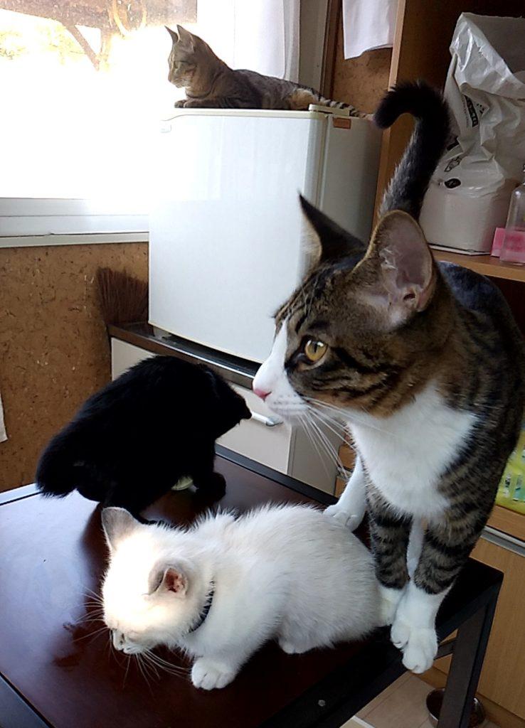 保護ねこハウスの猫たち5