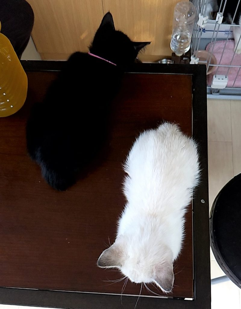 保護ねこハウスの猫たち6