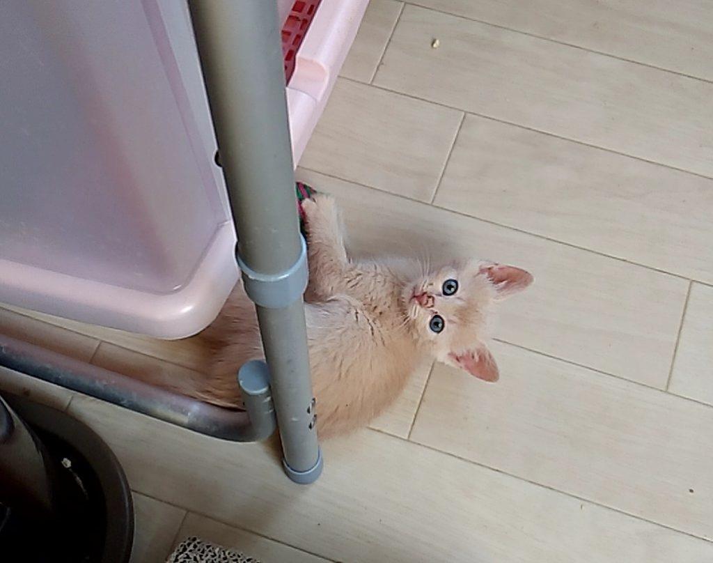 保護ねこハウスの猫たち8