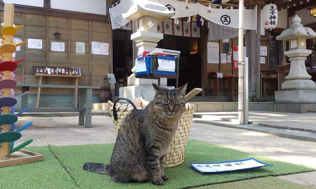 『王子神社』とらねこ1