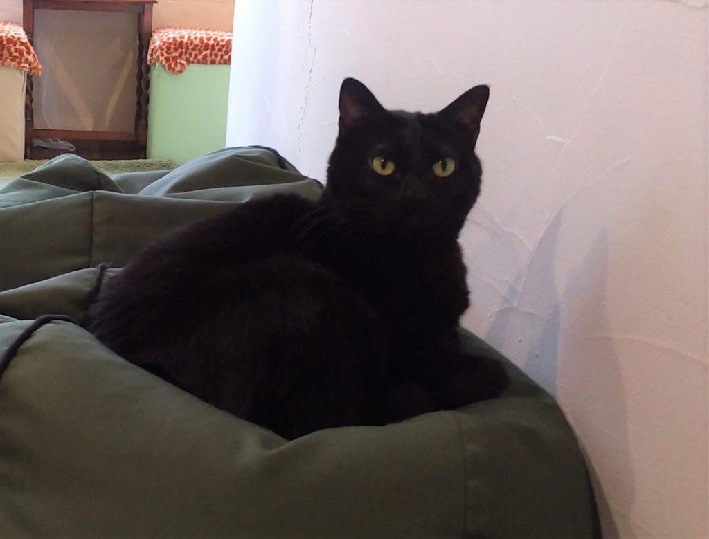 『猫カフェ ねこちゃる』黒猫