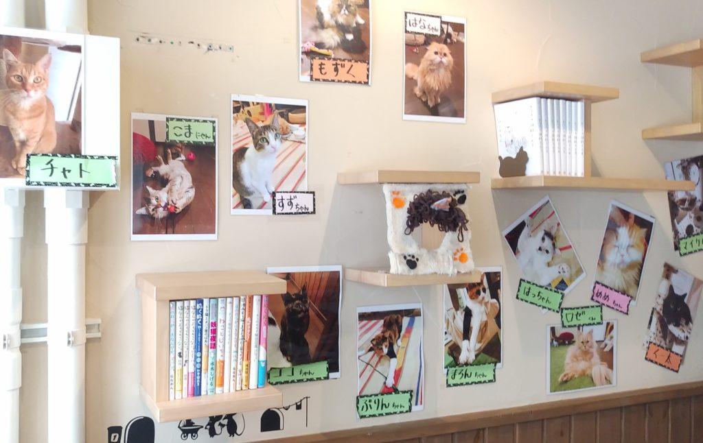『猫カフェ ねこちゃる』壁の棚