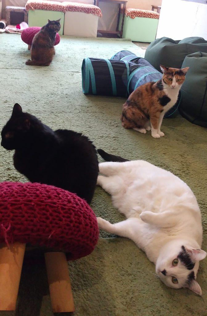 『猫カフェ ねこちゃる』の猫たち1