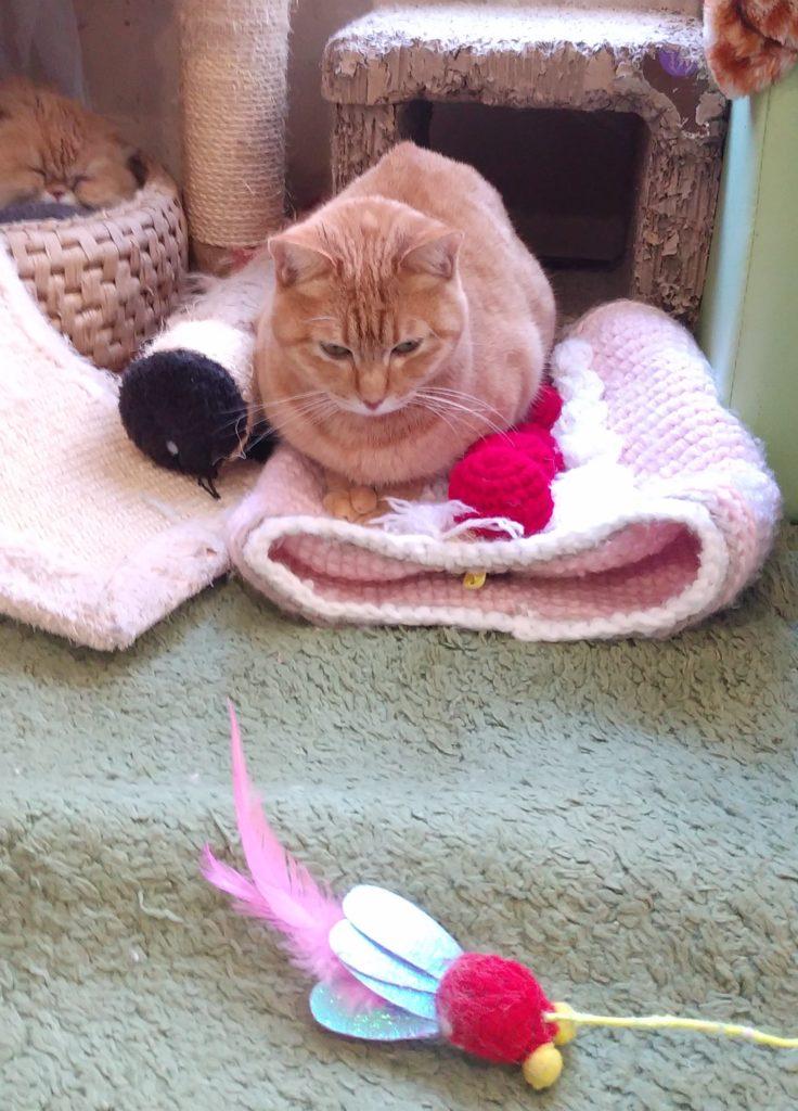 『猫カフェ ねこちゃる』茶トラとおもちゃ