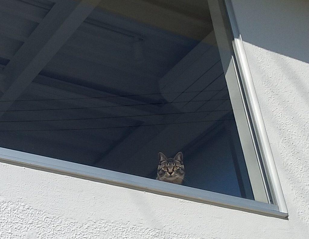 『猫カフェ Toneko』二階の窓の猫