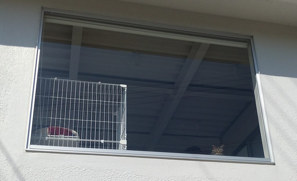『猫カフェ Toneko』二階の窓
