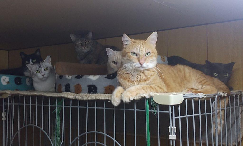 成猫ハウスの猫たち1
