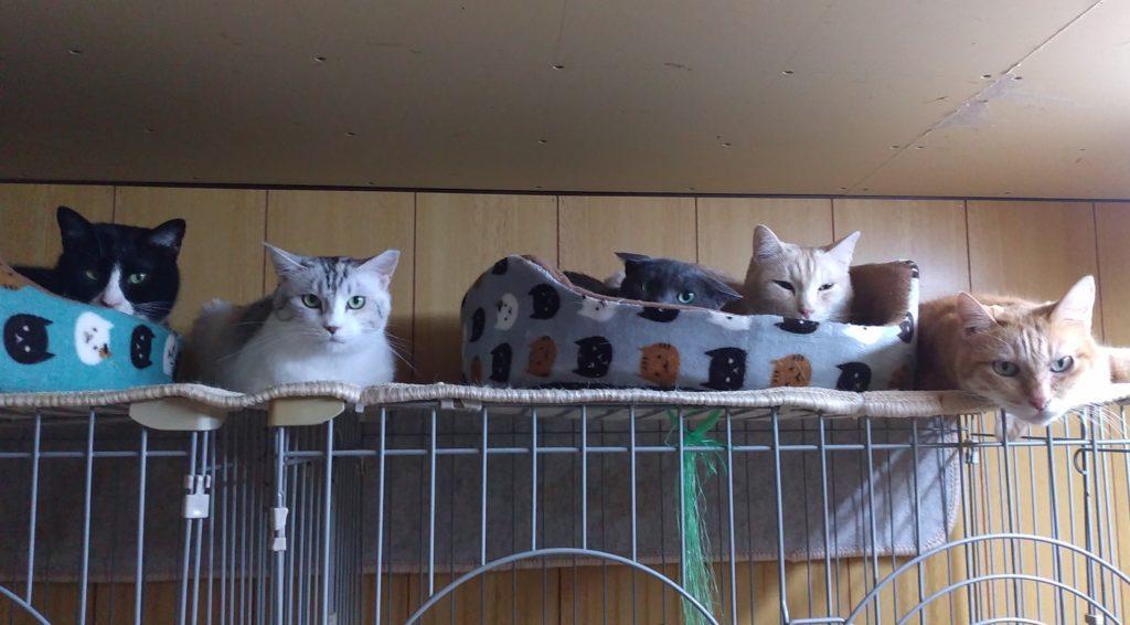 成猫ハウスの猫たち2