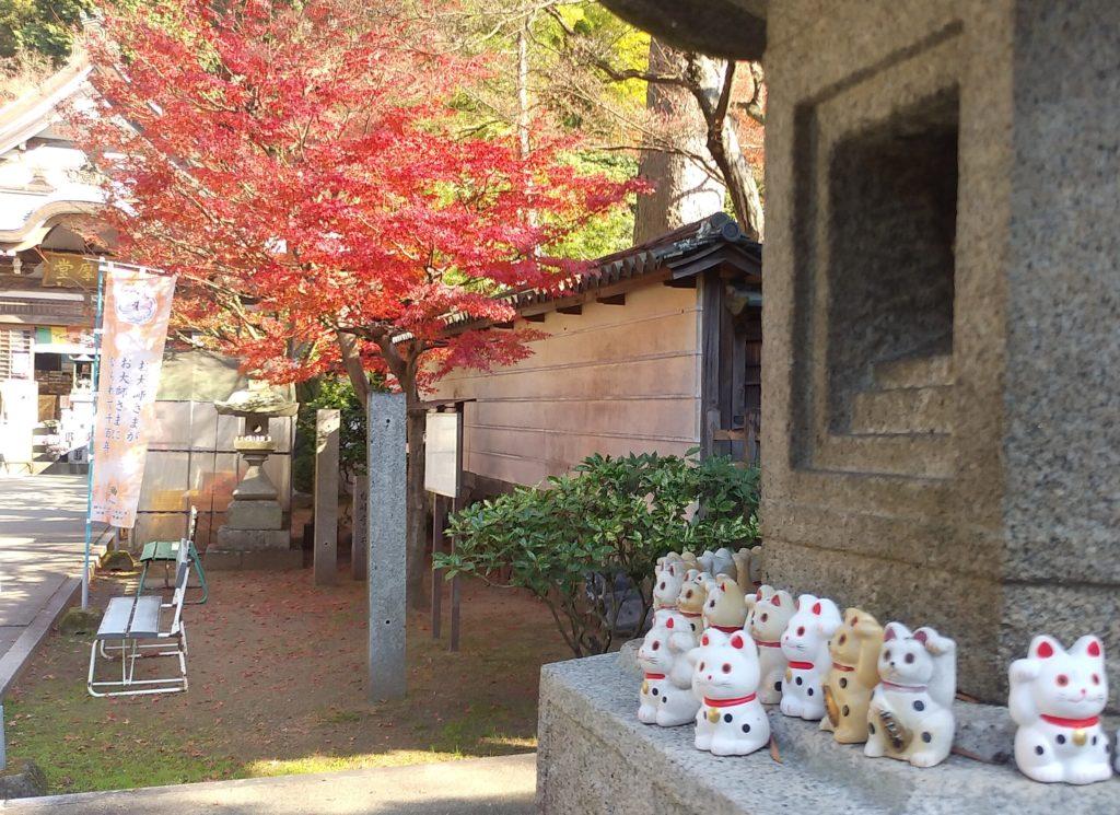 『白峰寺』紅葉と招き猫