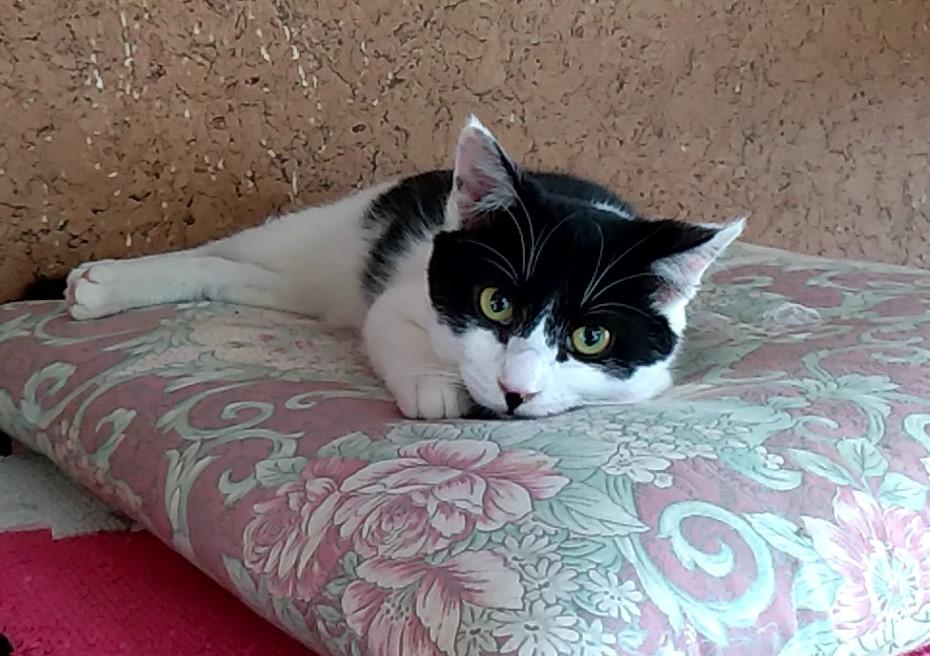 居残り猫1