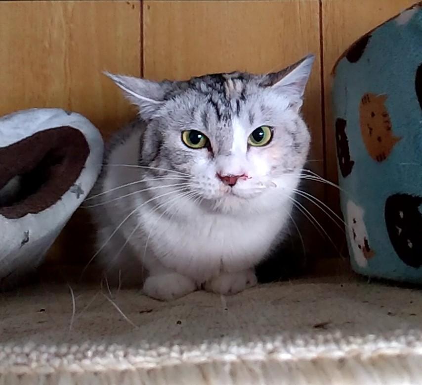 居残り猫3