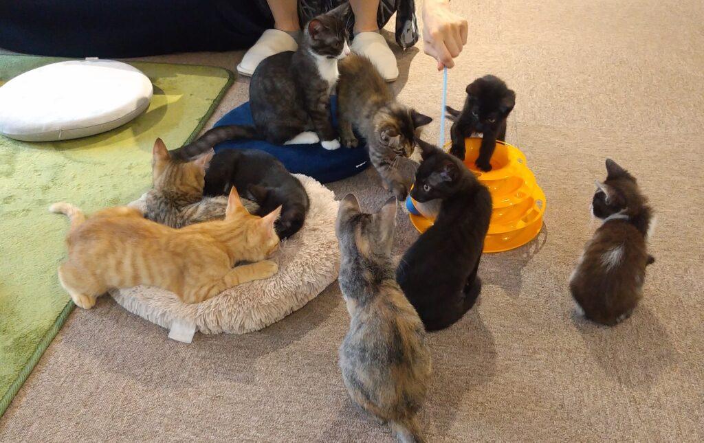 CATLOAF子猫いっぱい