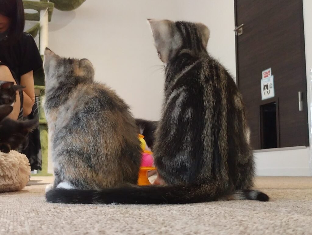 CATLOAF子猫3