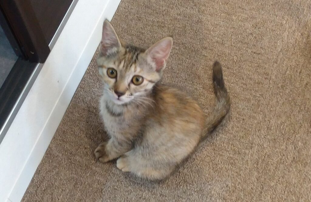 CATLOAF子猫1