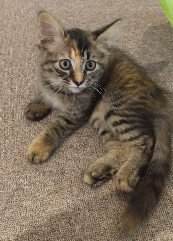 CATLOAF子猫6