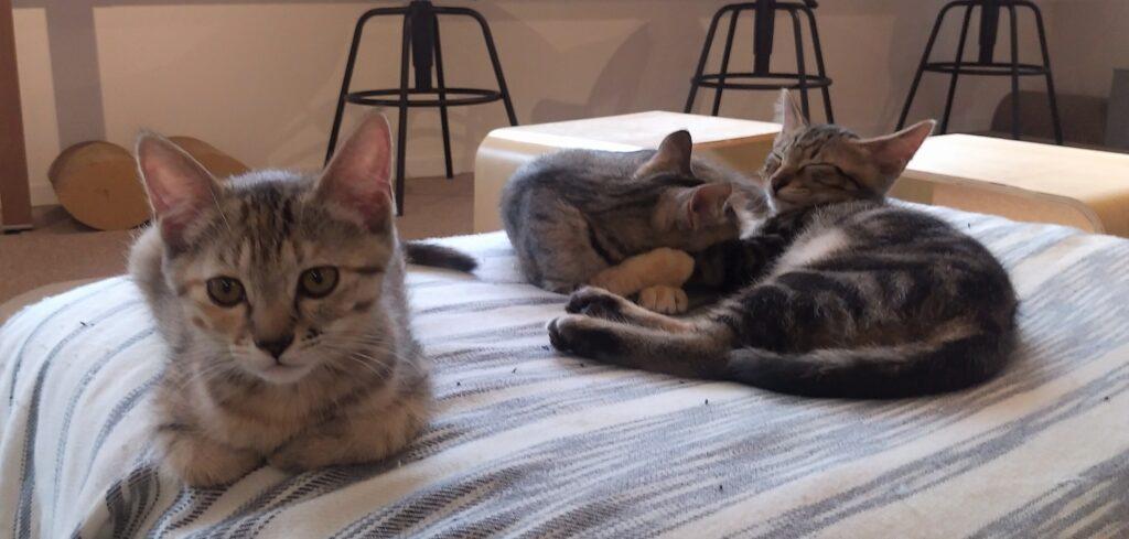 CATLOAF子猫7