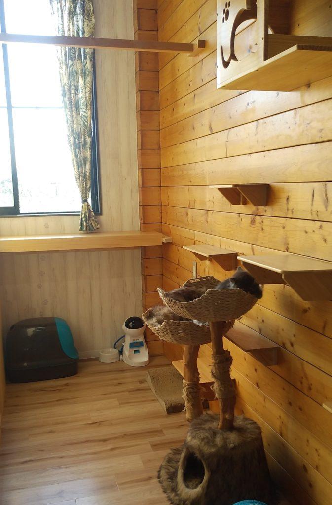 Pato's Cafe子猫部屋2