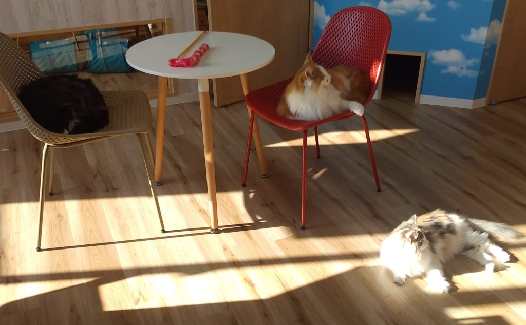 Pato's Cafe猫ルーム4