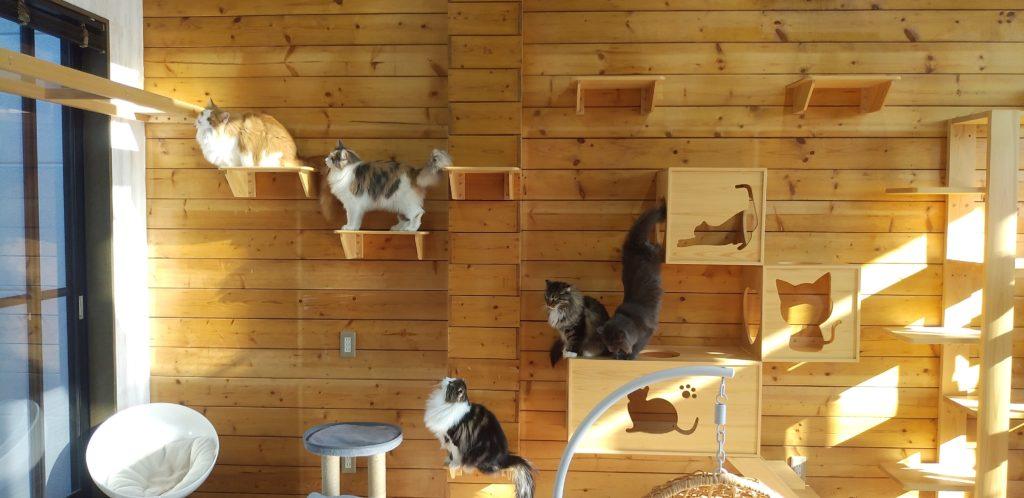 Pato's Cafe集まる猫