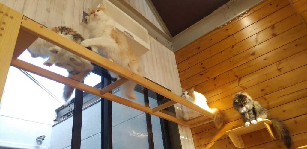 Pato's Cafe猫の橋