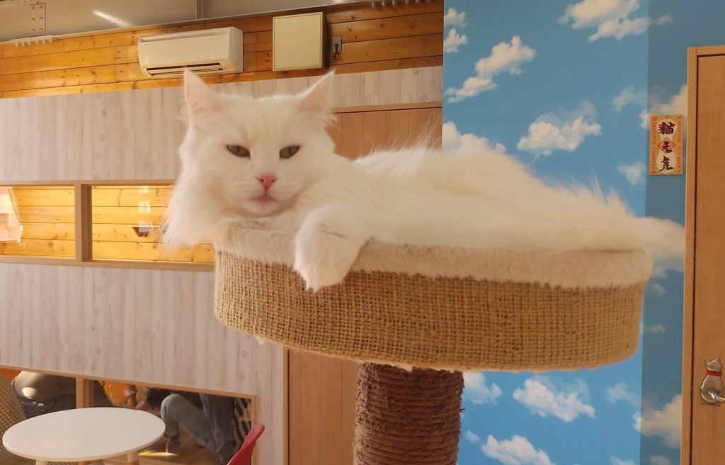 Pato's Cafeの猫2