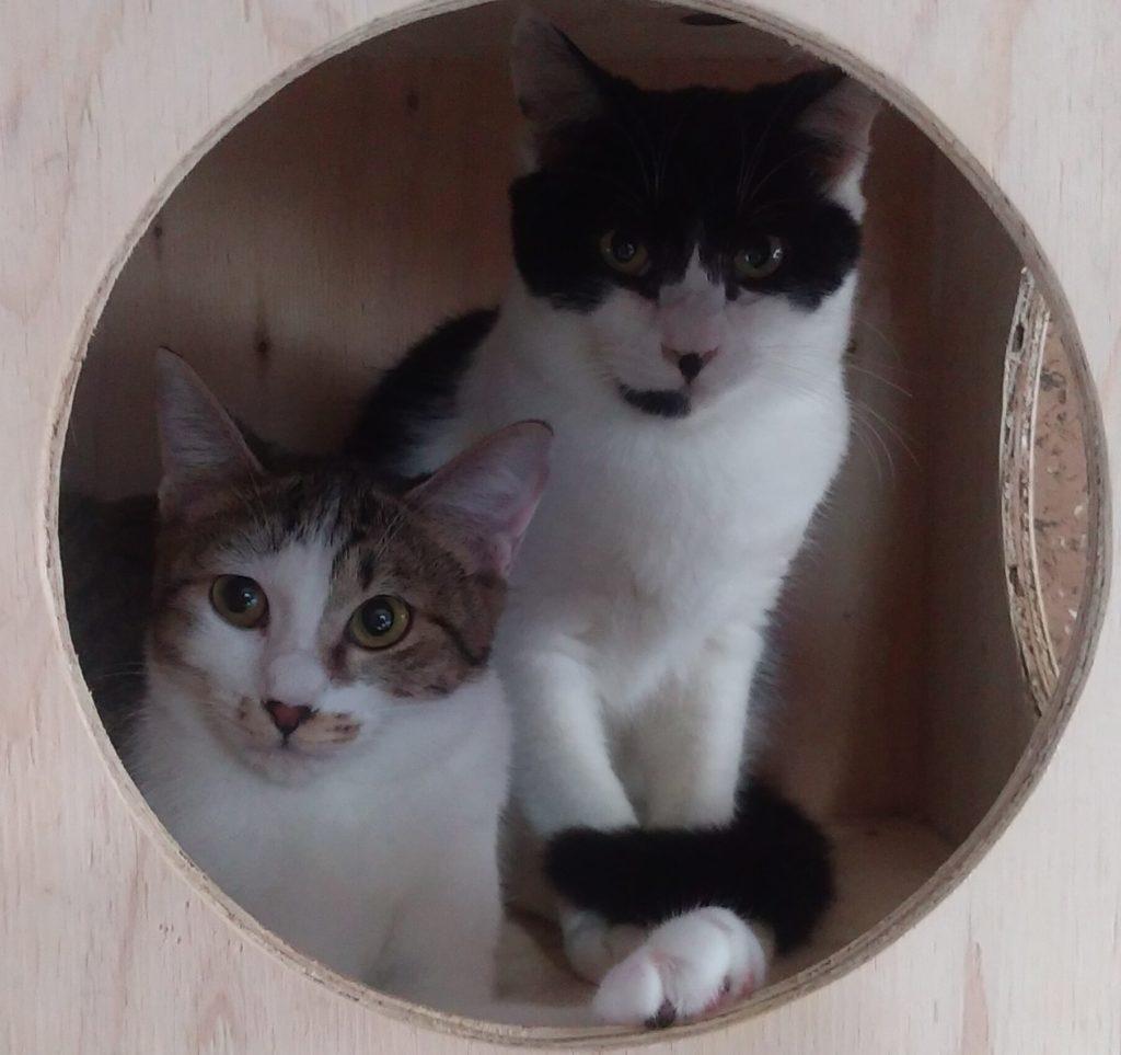 ボックスの中の猫