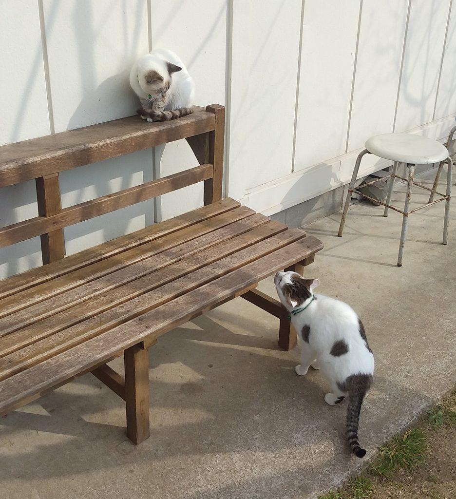 Botanベンチと子猫