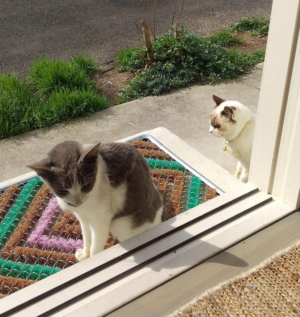 Botan出口に猫