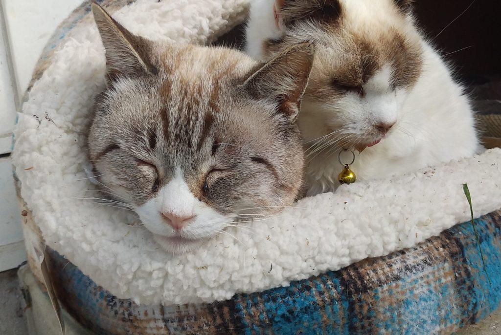 Botan眠る二匹の子猫