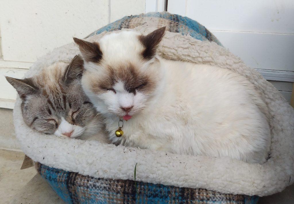 Botan眠る二匹の子猫2