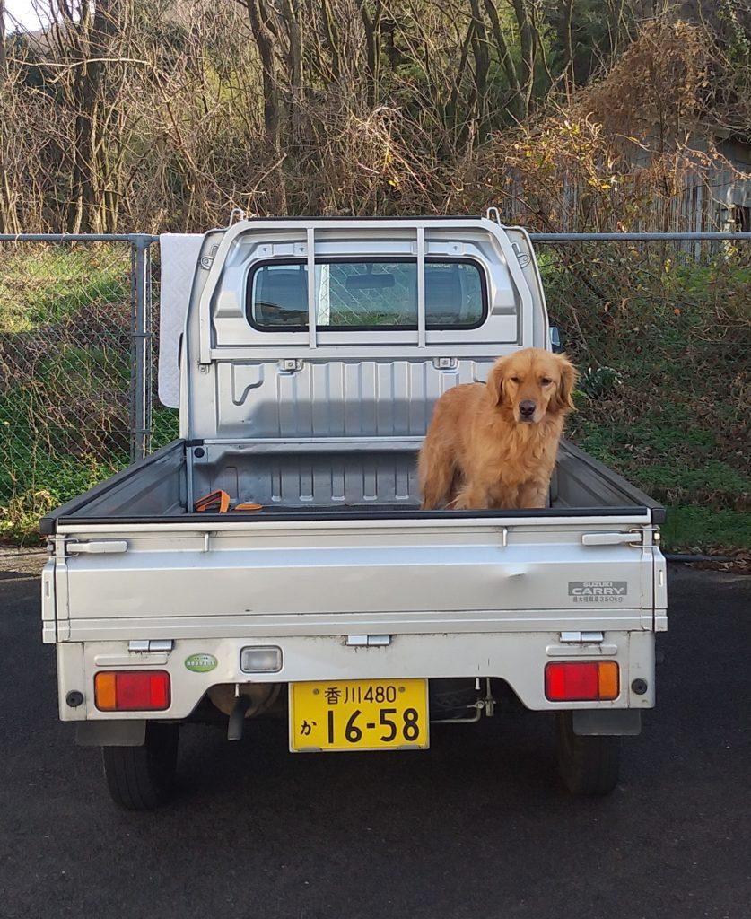 Botan軽トラ上の犬
