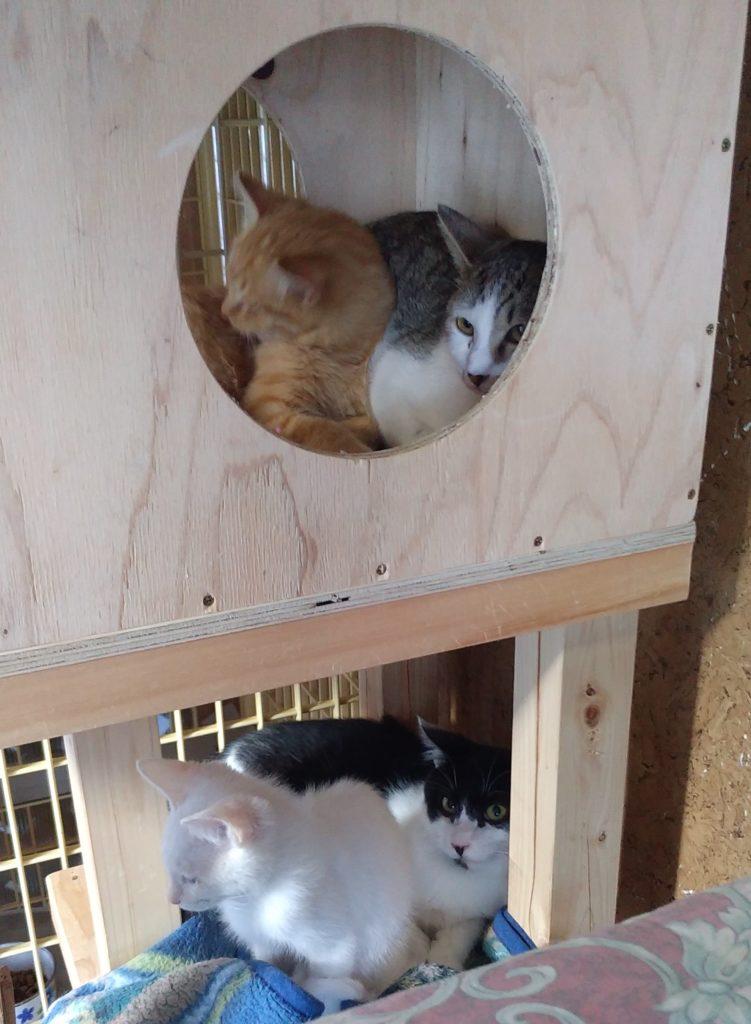 お正月の猫たち