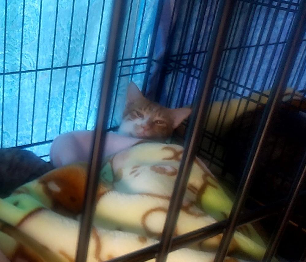 『スイーツカフェ クイール』猫