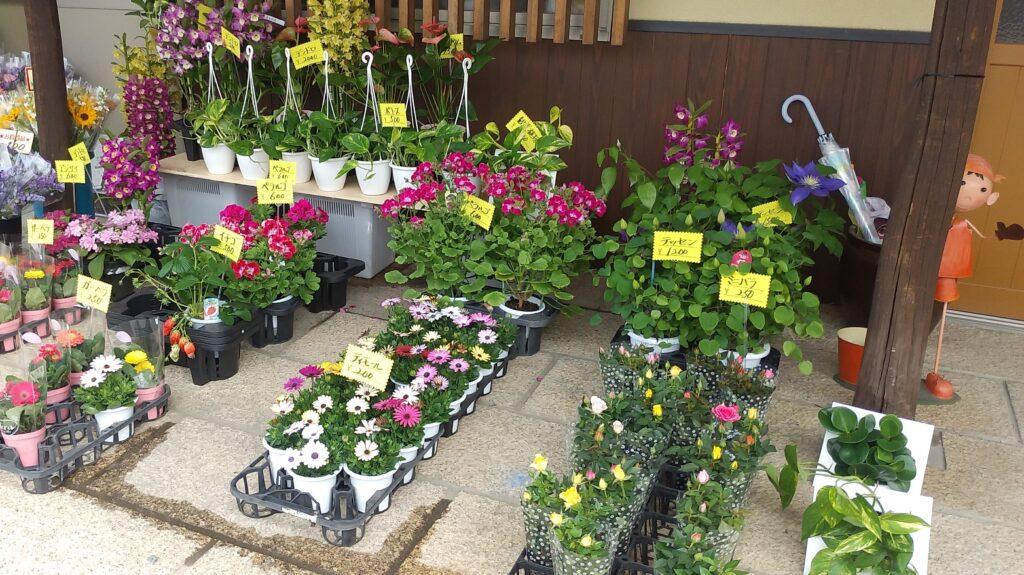 『夢心花(ゆめここは)』花の販売