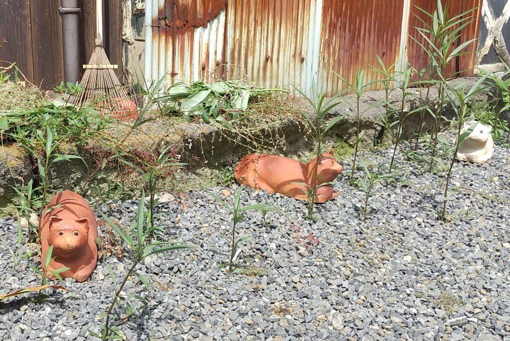 清水温泉道の猫