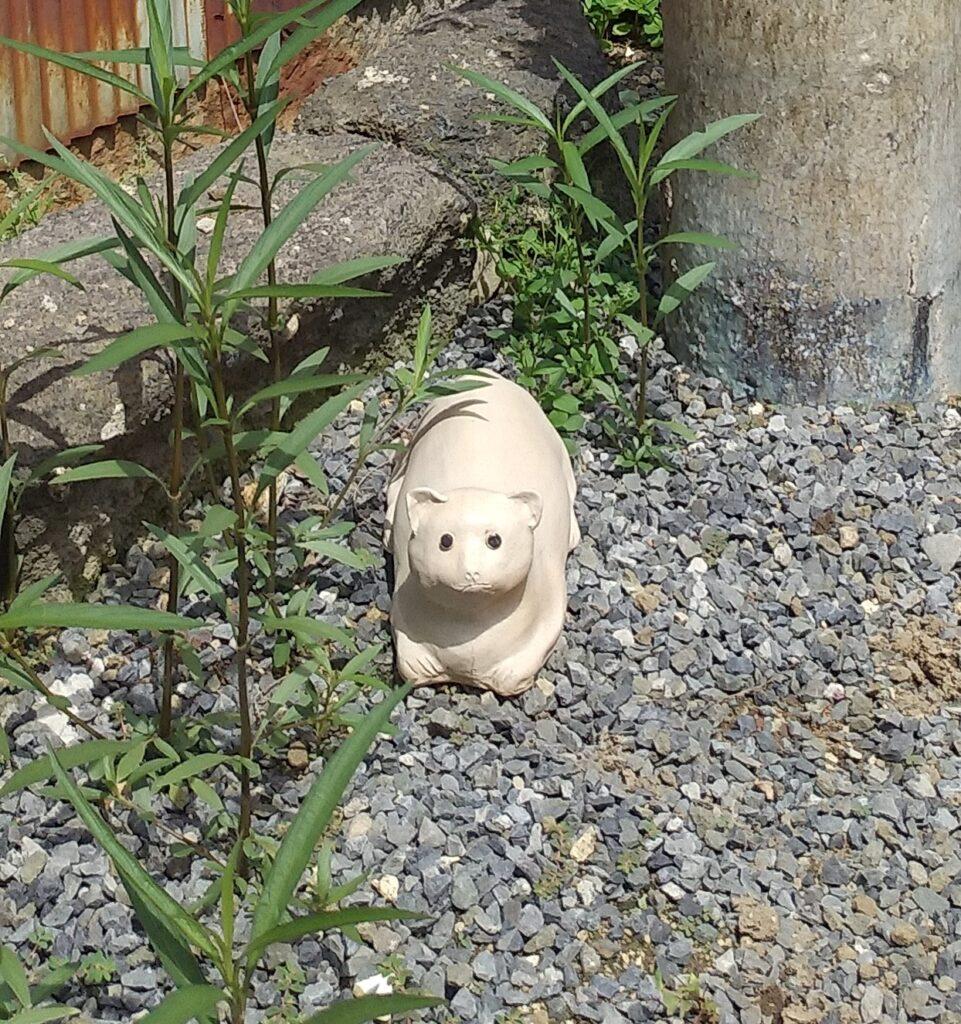 清水温泉道の猫2