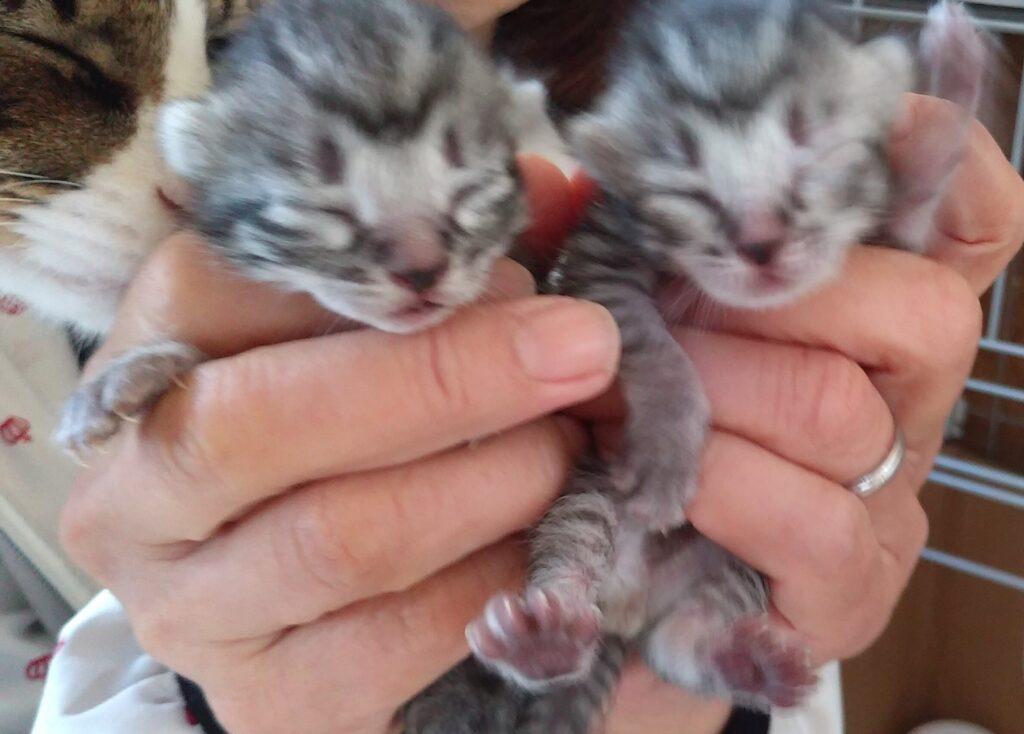 双子の子猫?!