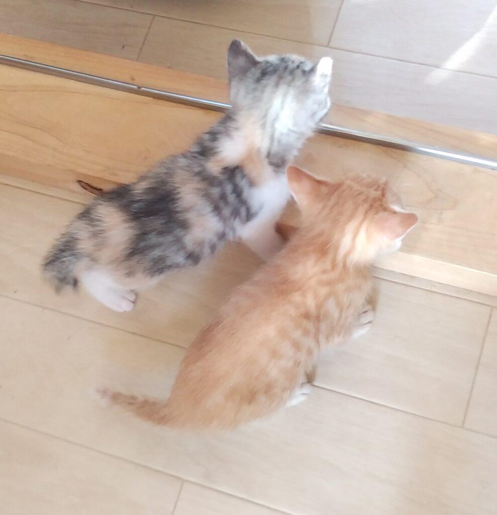 子猫のお散歩2